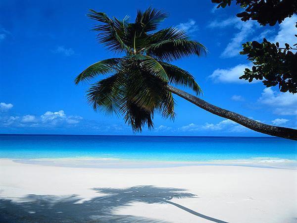 Punta Cana, Rep Dominicana | Casamientos Online