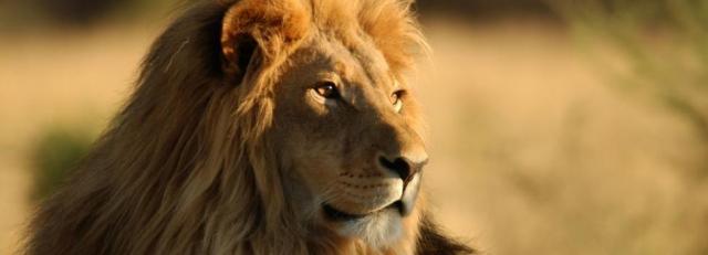 Kruger National Park, South Africa | Casamientos Online