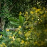 Estancia La Mimosa (Quintas y Estancias)