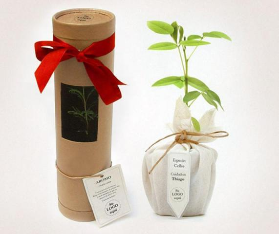 Arbol en Tubo - The Growing Gift | Casamientos Online