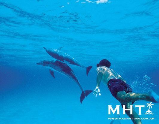 Mini Crucero MSC por las Bahamas desde Miami  | Casamientos Online