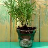 Semilla -La vida en verde- (Souvenirs)