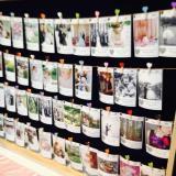 Nota de Souvenirs fotográficos!