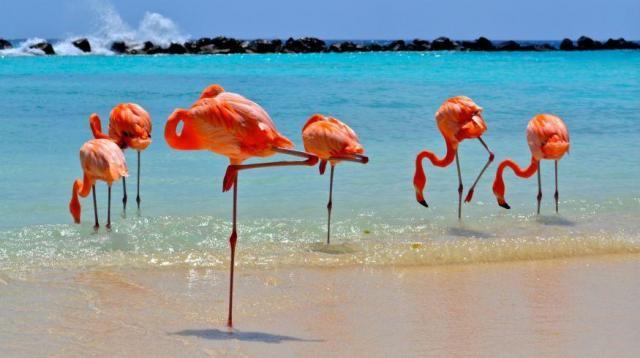 Aruba | Casamientos Online
