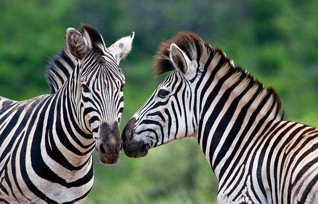 Kwazulu, Sudafrica | Casamientos Online
