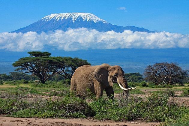 Mt. Kilimanjaro, Tanzania | Casamientos Online