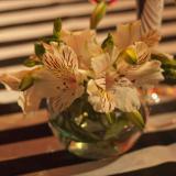 Peceritas con Flores
