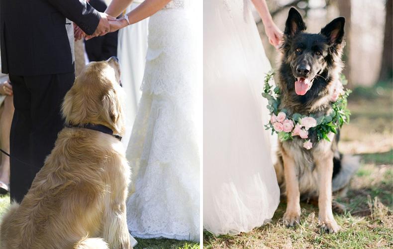 Aprovechen para hacer fotos con sus mascotas, es un recuerdo imborrable!