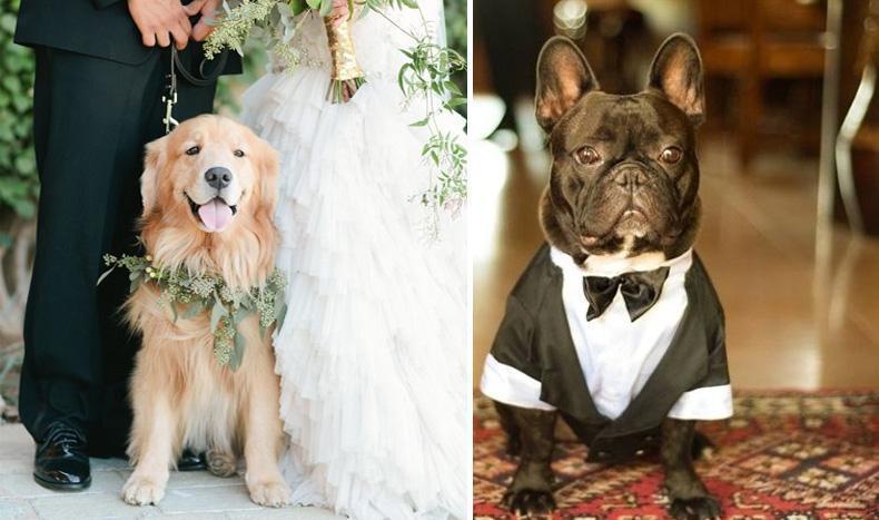 Consejos para incluir a tu mascota en tu casamiento