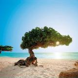 Aruba 2018 - Vuelo regular