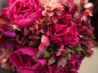 Imagen de Flores y... mas flores...