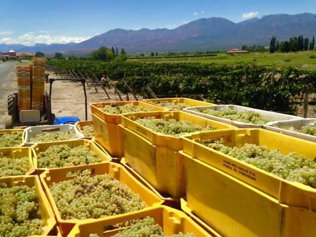 La Estancia de Cafayate Wine & Golf (Quintas y Estancias)