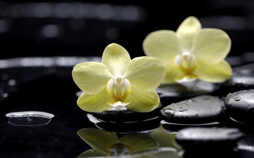 Flores Kioto (Ramos, Tocados y Accesorios)